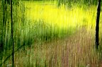 Zeche Zollverein trees and grass ICM impression.JPG