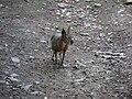 Zvíře v pražské zoo.jpg