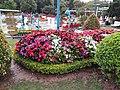 Đà Lạt flower park (August 6, 2018) (43307340054).jpg