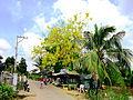 Đường vào xã Vĩnh Chánh.jpg
