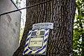 Багатовікове дерево дуба звичайного 02.jpg