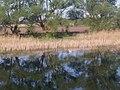 Борухівські озерця1.jpg