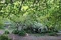 Ботанічний сад імені академіка Олександра Фоміна 27.jpg