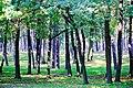 В тени деревьев Парка Партизанской Славы.jpg