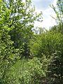 Дендрологічний парк 113.jpg