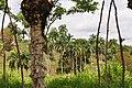 Доминиканская Республика - panoramio (50).jpg