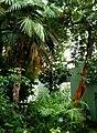 Донецький ботанічний сад - під куполом оранжереї.JPG
