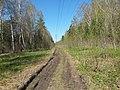 Дорога под ЛЭП - panoramio (1).jpg