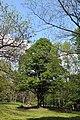 Національний ботанічний сад імені Миколи Гришка НАН України 03.jpg