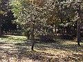 Парк у Матарушкој Бањи 5.JPG