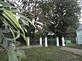Парк у Скала-Подільській.jpg