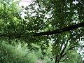 Парк шума Гази Баба во мај (113).JPG