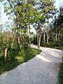 """Парк шума """"Гази Баба"""" 63.jpg"""