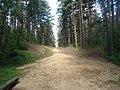 Пещанная дорога - mikroskops - Panoramio.jpg