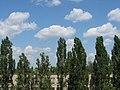 Пос. Юбилейный, СШ №53 - panoramio.jpg