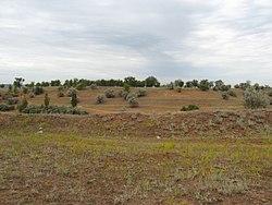 Растительность - panoramio.jpg