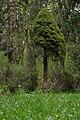 Сирецький дендрологічний парк 03.jpg