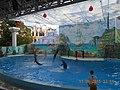 Сочинский дельфинарий парка «Ривьера». 72.jpg