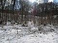 Украина, Киев - Голосеевский лес 30.jpg