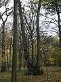 Украина, Киев - Голосеевский лес 78.jpg