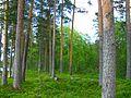 Шокшинская бухта - panoramio (26).jpg