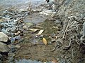 ساقية مياه تقليدية تستعمل لمرور الماء و سقي الاشجار و كافة المزروعات..jpg