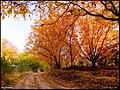 پاییزجاده غار هامپوییل - panoramio.jpg