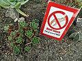 گلخانه کاکتوس دنیای خار در قم. کلکسیون انواع کاکتوس 34.jpg
