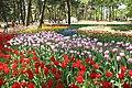 ひたち海浜公園 - panoramio (44).jpg