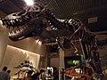 国立科学博物館 - panoramio (2).jpg