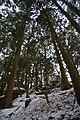 城ヶ峰神社 - panoramio.jpg