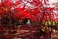 平岡樹芸センター(Hiraoka arboriculture center) - panoramio (26).jpg