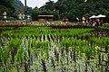綠博鴨 Green Expo Ducks - panoramio.jpg