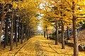 西岡公園(Nishioka park) - panoramio (5).jpg