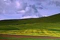 边境公路旁的油菜地1(五卡-七卡)【路人】 - panoramio.jpg