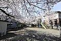 長地地区公園桜 - panoramio.jpg