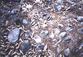 석토성 강돌.jpg