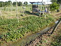 0581jfLandscapes Roads Vegetables Fields Binagbag Angat Bulacanfvf 16.JPG