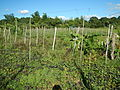 0581jfLandscapes Roads Vegetables Fields Binagbag Angat Bulacanfvf 25.JPG