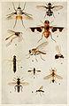13-Indian-Insect-Life - Harold Maxwell-Lefroy - Bombyliidae Asilidae etc.jpg