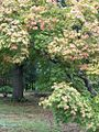 1461963 Charlotte-and-the-autumn-leaves 620.jpg