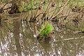 15-05-09-Biosphärenreservat-Schorfheide-Chorin-Totalreservat-Plagefenn-DSCF5568-RalfR.jpg