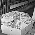 1960 Nurserie à Brouessy Cliché Jean-Joseph weber-5.jpg