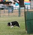 2007 Mendocino County Fair & Apple Show 20.jpg