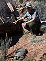 2008 Figure 6. Desert tortoise monitoring (3 photos) (cd215cbd-a331-4b9f-9ea2-7148ff1d4a73).jpg
