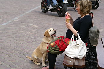 English: Dog begging for ice cream at Place du...