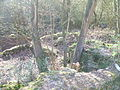 2011 04 06 Grabungszone Pützfeld (7).JPG