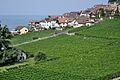 2012-08-12 10-11-04 Switzerland Canton de Vaud Rivaz.JPG