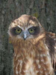 Wikipedia:The Wikipedia Library/TWL OWLs - Wikipedia