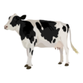 201409 cow.png